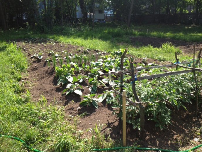 Vegetable Grove