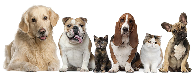Image of dogs and cats