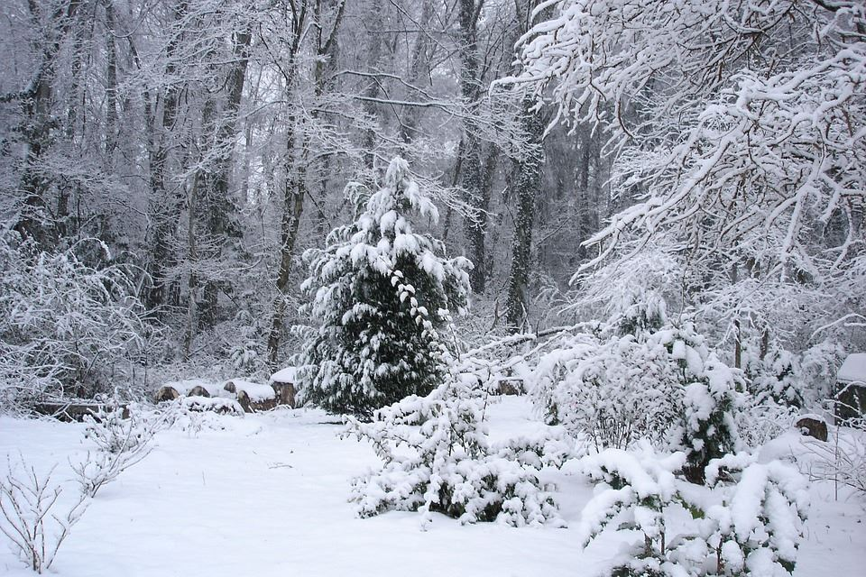 Image of Snow