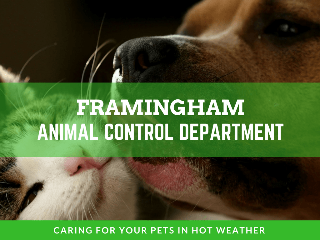 IMAGE OF ANIMAL CONTROL WEATHER TIPS FOR ANIMALS HEADER