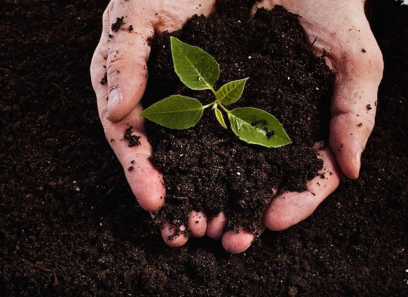 Image of hands in soil