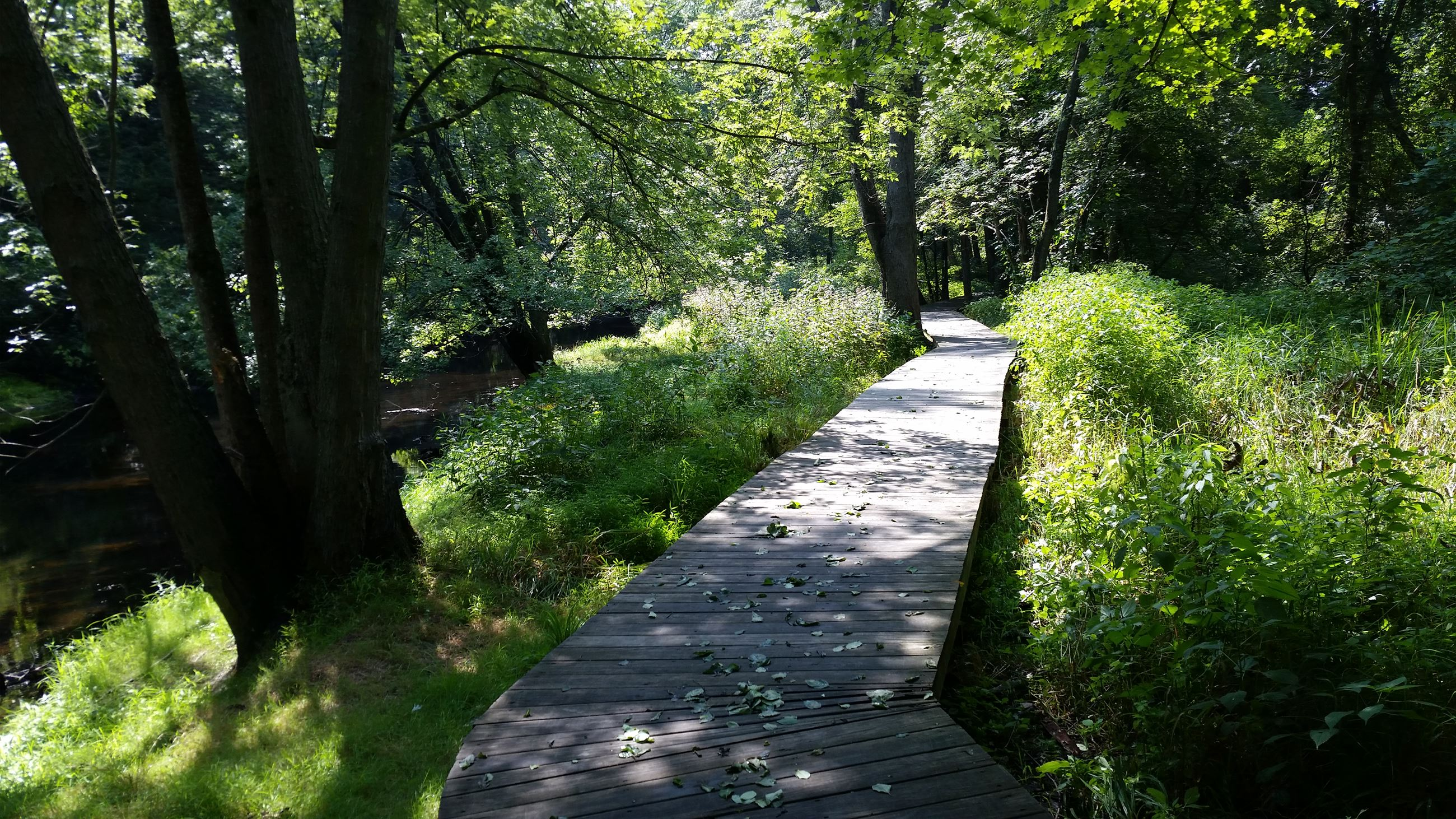 CG Trail boardwalk 3