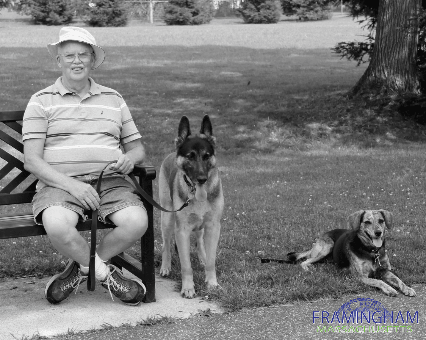 dog walker sitting on bench with 2 dogs